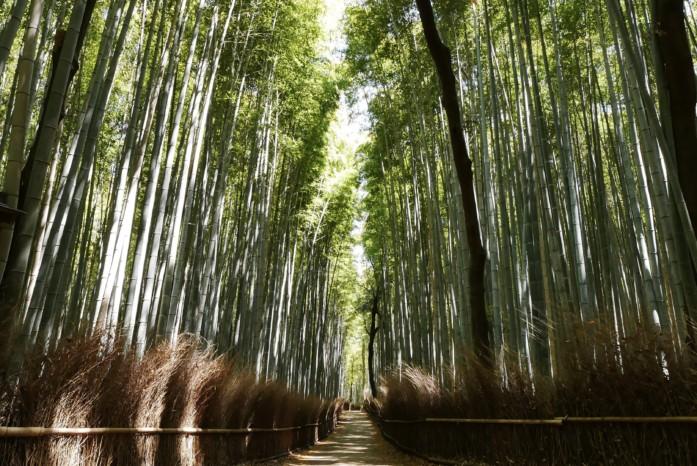 京都・嵐山にある竹林の小径