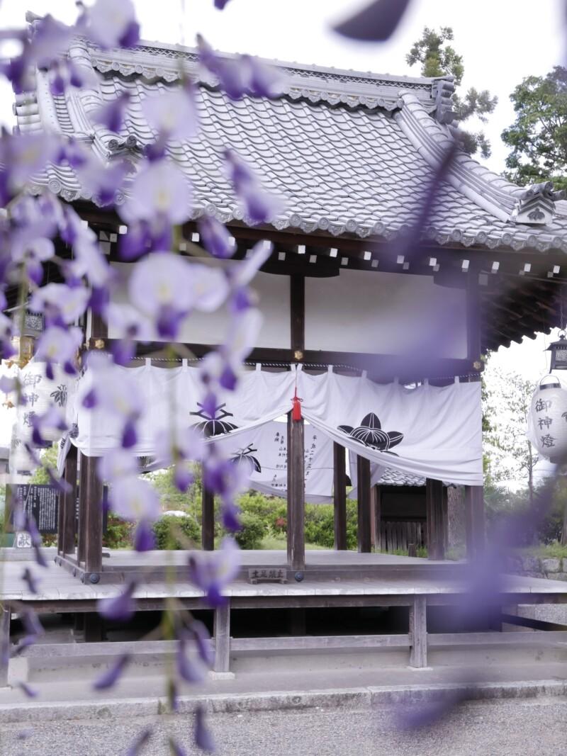 惣社神社と藤の花